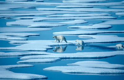 You'd need a heart of stone to not care about these little bear cubs, but don't forget, penguins need our help too!